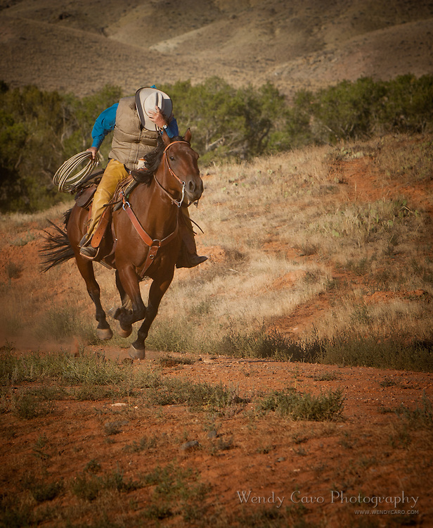 Wrangler holding on to hat, rope in hand, during gust of wind, foothills of the Bighorn Mountains, Wyoming
