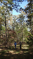NWA Democrat-Gazette/FLIP PUTTHOFF <br />Hikers explore the Forest Trail. The woods are more open along the trail, similar to a savannah environment that was characteristic of the Ozarks centuries ago.