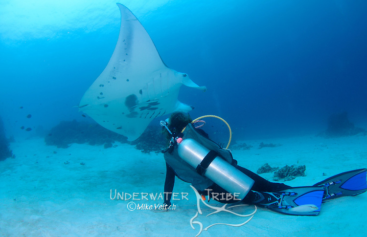 A photographer shoots a Manta ray, Manta birostris, Manta Sandy, Dampier Strait, Raja Ampat, West Papua, Indonesia, Pacific Ocean (No MR)