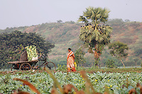 A woman walks amongst fields on the outside of Kolkata.<br /> <br /> To license this image, please contact the National Geographic Creative Collection:<br /> <br /> Image ID: 1925833 <br />  <br /> Email: natgeocreative@ngs.org<br /> <br /> Telephone: 202 857 7537 / Toll Free 800 434 2244<br /> <br /> National Geographic Creative<br /> 1145 17th St NW, Washington DC 20036
