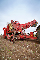 Harvesting potato seed with a Grimme SV260 - Norfolk, September