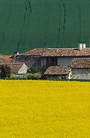 Europe/France/Poitou-Charentes/16/Charente/Env de Cognac : Champs de colza et ferme charentaise