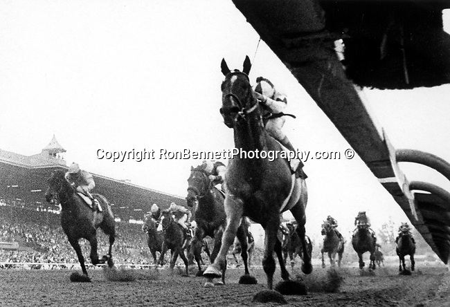 """Preakness stakes is an American Grade i stakes race 1 1/16 mile thoroughbred horse race for three year old horses held at Pimlico Race Course in Baltimore Maryland, Colts and geldings """"The Run for the Black-Eyed Susans,"""""""