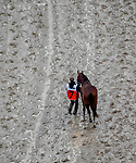 May 4, 2019 : Maximum Security #7 is led back to the barns after finishing first and then being disqualified to 17th place in the Kentucky Derby on Kentucky Derby Day at Churchill Downs on May 4, 2019 in Louisville, Kentucky. John Voorhees/Eclipse Sportswire/CSM