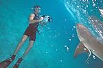 Peter Zuccarini Videoing Lemon Shark