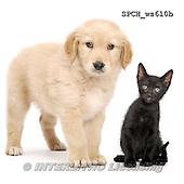 Xavier, ANIMALS, REALISTISCHE TIERE, ANIMALES REALISTICOS, FONDLESS, photos+++++,SPCHWS610B,#A#