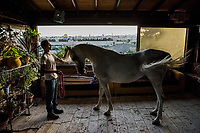 For Palestinians, Raising Arabian Horses Is 'the Hobby of the Poor'