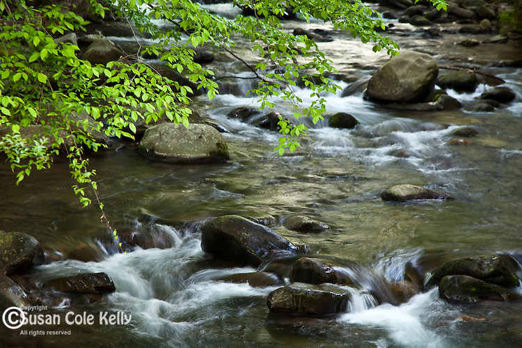 Springtime at a babbling brook, Gatlinburg, TN, USA