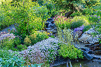 France, Hautes-Alpes (05), Villar-d'Arène, jardin alpin du Lautaret, ruisseau et plantes d'Amérique du Nord