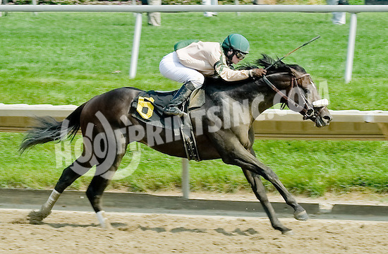 Avenue B winning at Delaware Park on 5/31/11