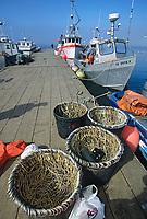 Long line hooks and totes, Halibut fishing boats, harbor, St. Paul Island, Pribilof Islands, Alaska