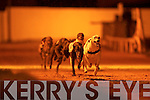 Earl Hawks No 3 winner of the 6th Race at the Kingdom Greyhound Stadium, Tralee on Friday night, in the Mike cronin Readymix Juvenille Classic Round 2 Heat 3 with No 5 Droopys Tornes close on his tail...   Copyright Kerry's Eye 2008
