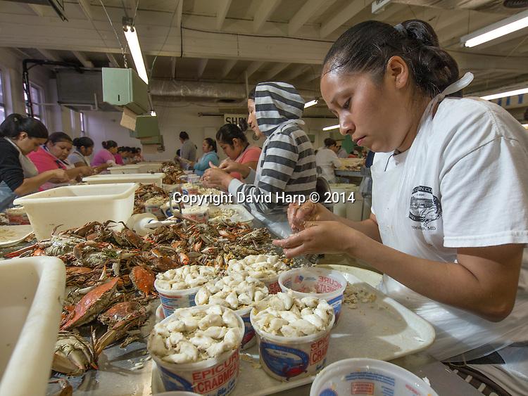 Magdelena Mata and her fellow Latina represent the modern face of crab picking.