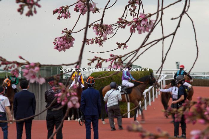 TAKARAZUKA,JAPAN-MAR 22: Track scene at Hanshin Racecourse on March 22,2020 in Takarazuka,Hyogo,Japan. Kaz Ishida/Eclipse Sportswire/CSM