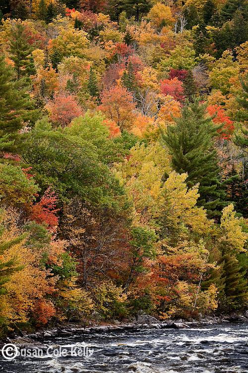 Fall fliage at Big Amberjackmockamus Falls, Piscataquis County, ME