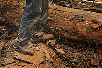 H and L Salvage buys timber (what is left after a company clear cuts and leaves), and they make red cedar shakes and cut boards.  Keith and Desiree Landers and daughter Carmen live beside the mill on Goose Creek.  Desirsee cuts shingles--probably the only woman to do this.  Nathan Kinsman and Jake Howell split cedar for shakes.  Jack and Don Hays (red) separate wood that Keith cuts with his saw..Thorne Bay on Prince of Wales Island has a population of 495.  It was founded as a logging camp in the '60s.  Much of its economy is based on the timber industry, but today they are more dependent on sport fishing.  ..