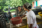 Workers sort out the dried and baked maggots at the pilot project farm involving maggot production in village Kundang, at the outskirts of capital Kuala Lumpur, Malaysia.