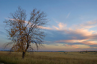A tree and grasslands fill the eye at sunset at Theodore Roosevelt National Park (south unit), in western North Dakota