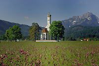 The church of St Coloman and it's onion shaped dome against the mountains, in a spring meadow showing red campions. Füssen, Bavaria, Germany.