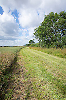 6m ELS buffer strip in OSR field mown in late July, leaving the cross complaince strip at the hedge - Lincolnshire
