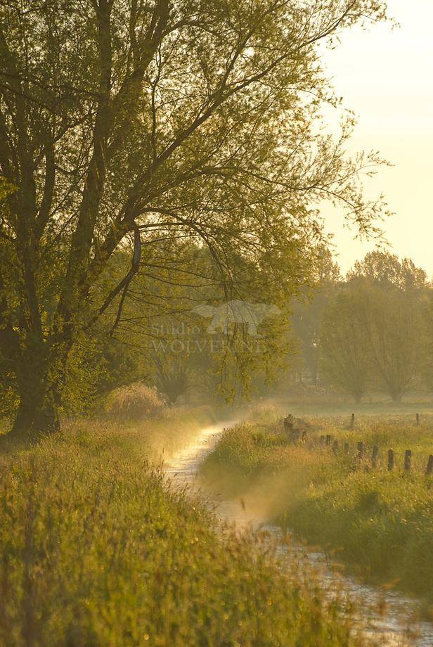 Sloot in ochtendmist, Sterrenbosch
