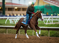 DEL MAR, CA - NOVEMBER 01:   Free Drop Billy, owned by Albaugh Family Stables and trained by Dale L. Romans, exercises in preparation for Sentient Jet Breeders' Cup Juvenile at Del Mar Thoroughbred Club on November 01, 2017 in Del Mar, California. (Photo by Alex Evers/Eclipse Sportswire/Breeders Cup)