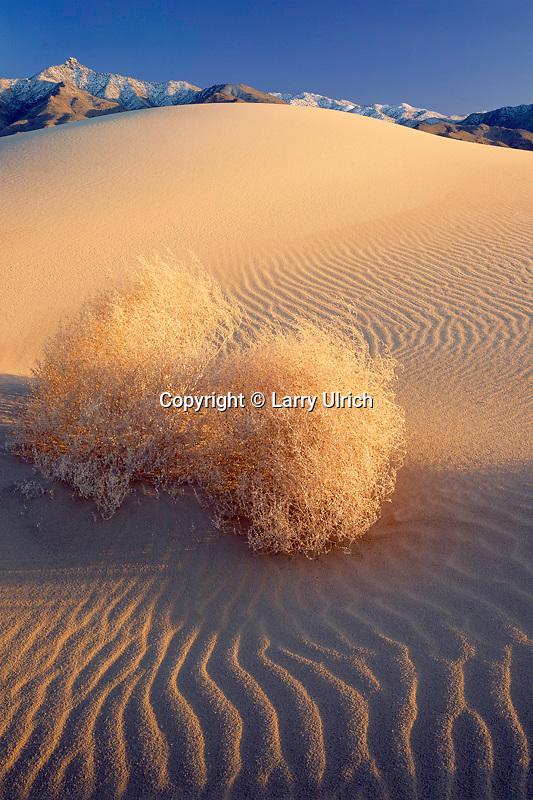 Kelso Dunes and Granite Mountains<br /> Mojave National Preserve<br /> Mojave Desert<br /> San Bernardino County, California