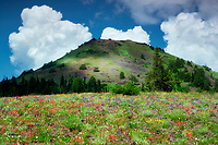 Cone peak with wildflowers and clouds. Linn County, Oregon