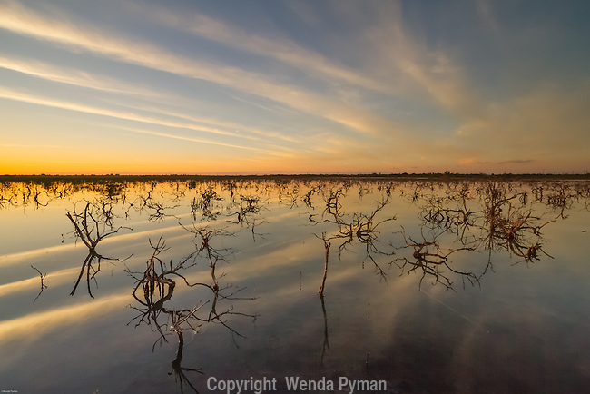 Clouds pick up the golden light at sunrise and is reflected in the shallow waters & young mangroves of the Florida Keys