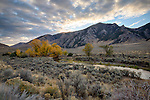 Idaho, Central, Custer County, Mackay. Autumn color along Antelope Creek in the Antelope Valley at sunrise in early October.