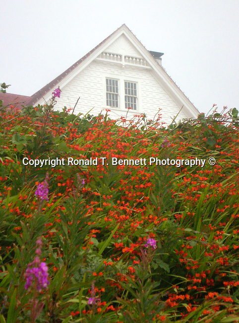 Flower Heaceta Head lighthouse and keepers quarters Florence  Oregon, Heceta Head Lighthouse Florence Oregon, Heceta Head Lighthouse May 30 1894, flowers,  Lightkeepers' house, Lighthouse light, lighthouse stairs, Pacific Ocean, Plains, woods, mountains, forest, desert, rain, Pacific Northwest, Fine art Photography and Stock Photography by Ronald T. Bennett Photography ©, Pacific Ocean, Fine Art Photography by Ron Bennett, Fine Art, Fine Art photography, Art Photography, Copyright RonBennettPhotography.com © Fine Art Photography by Ron Bennett, Fine Art, Fine Art photography, Art Photography, Copyright RonBennettPhotography.com ©
