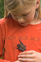Mädchen, Kind mit Zwergfledermaus, Zwerg-Fledermaus, Pipistrellus pipistrellus, Common pipistrelle, Pipistrelle commune
