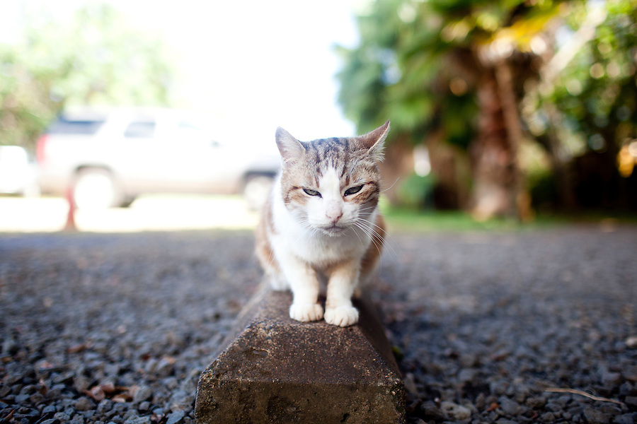 A cat sits atop a parking block outside of a helicopter agency on Kauai, HI