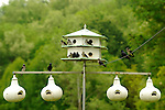 Purple Martin houses. Bud Haner, 7864 Route 75, Gallipolis, OH 45631