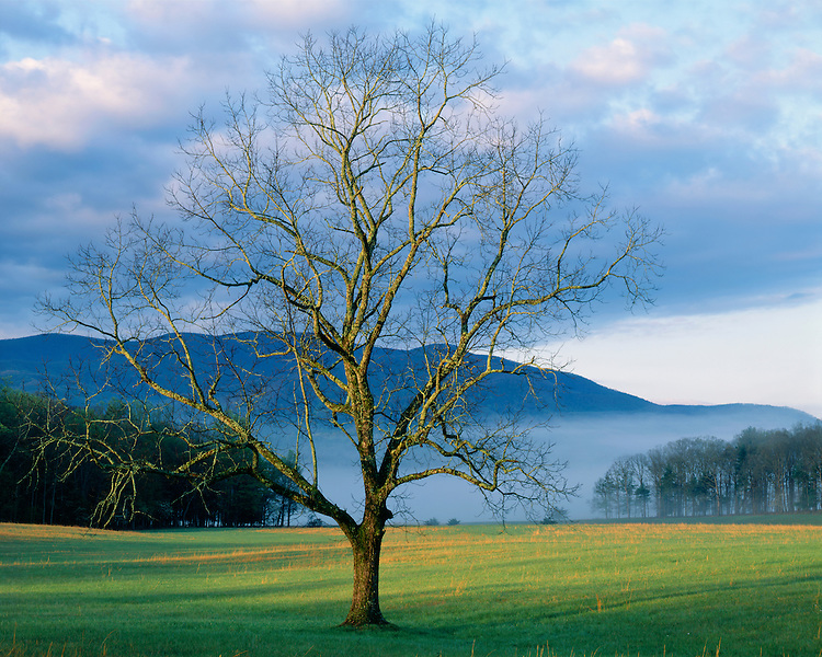 Foggy sunrise light in Cades Cove; Great Smoky Mountains National Park, TN
