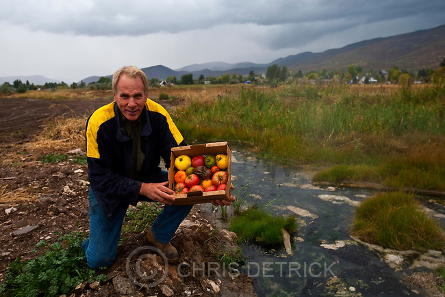 Chris Detrick  |  The Salt Lake Tribune .Dale Allred poses for a portrait with some of his organic tomatoes next to the hot water spring at the Jacobs Cove Heritage Farm in Midway Thursday October 7, 2010.  Allred is an organic farmer who is going to develop geothermal heated hothouses in Midway to provide fresh, locally grown, chemical free produce year-round.