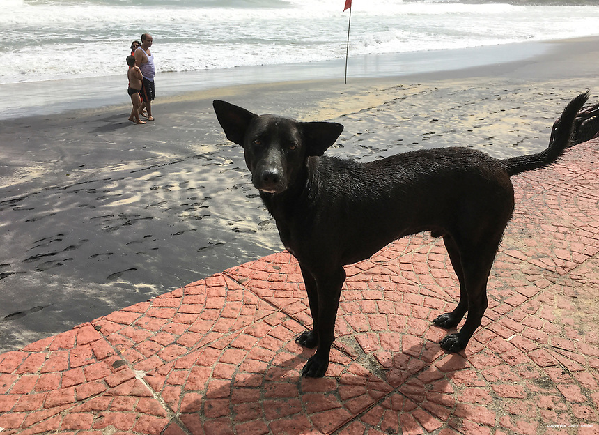 A feral dog hopes for a handout of food at Lighthouse beach in Thiruvananthapuram, Kerala, India  June 6, 2017 (Cellphone Photo by Cheryl Senter)