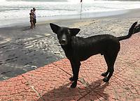 2017 Dogs of Kerala India