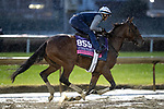November 1, 2018: Newspaperofrecord (IRE), trained by Chad C. Brown, exercises in preparation for the Breeders' Cup Juvenile Fillies Turf at Churchill Downs on November 1, 2018 in Louisville, Kentucky. Alex Evers/Eclipse Sportswire/CSM