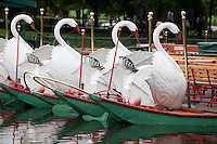Swan boats, Public Garden, Boston, MA