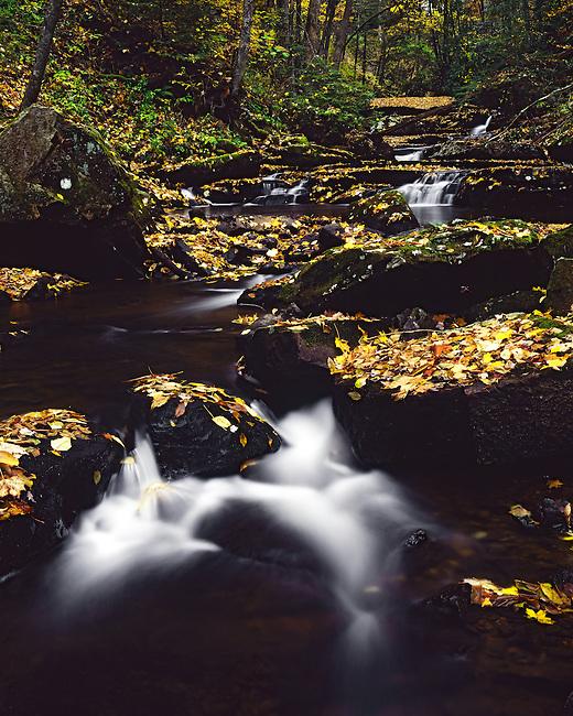 Autumn along Big Tumbling Creek, Clinch Mountain Wildlife Management Area, VA