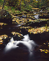 Autumn along Big Tumbling Creek, Clinch Mountain Wildlife Management Area, VA
