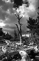 Mount Evans, Colorado (Black & White)