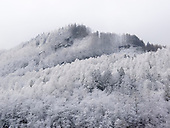 Bad Ragaz, Switzerland. Forest in the early morning coated with a heavy haw frost.