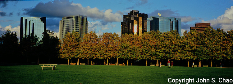Sunlight coming through a cloud gap spotlights a section of park and office buildings behind trees. Bellevue Downtown Park, Bellevue, Washington State. Photographed in XPan format.
