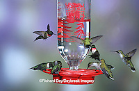 01162-086.07 Ruby-throated Hummingbirds (Archilochus colubris) at Best One Hummer Feeder Shelby Co.  IL