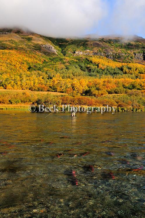 Alaska 09  fall fly fishing on the Kulik River