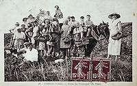 Europe/France/89/Yonne/AOC Chablis: Carte postale ancienne Vendange manuelle