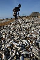 INDIA Tamil Nadu Nagapattinam, coast fishermen, dry fish / INDIEN Nagapattinam, Kuestenfischer, Trockenfisch