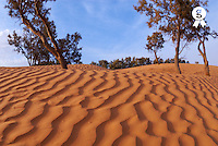 Tunisia, Ksar Ghilane, Sahara Desert, ripples in sand and trees (Licence this image exclusively with Getty: http://www.gettyimages.com/detail/sb10065474dw-001 )